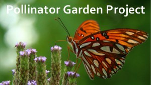 Butterfly Pollinator Garden at the refuge