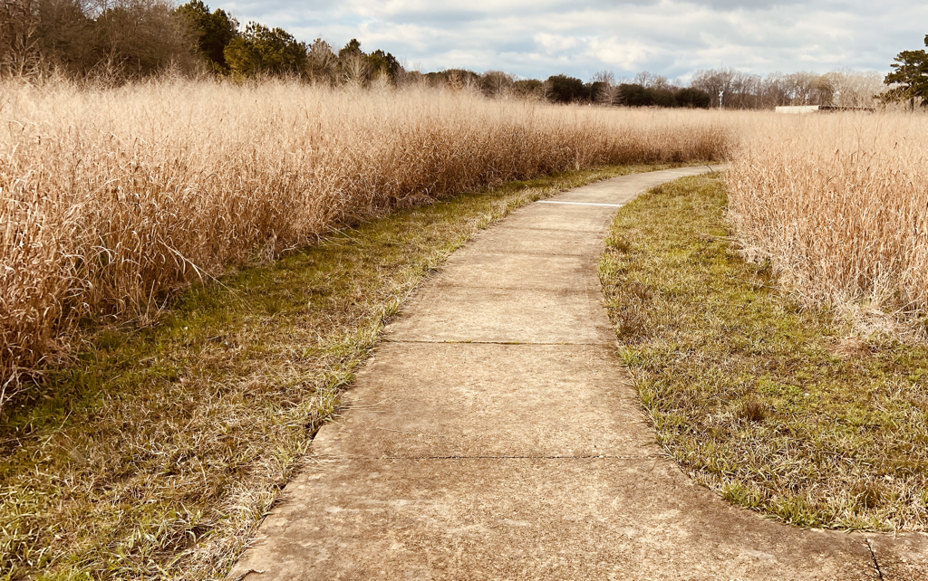 Prairie Trail at Black Bayou Lake NWR grasslands provide host plants for butterflies and insects